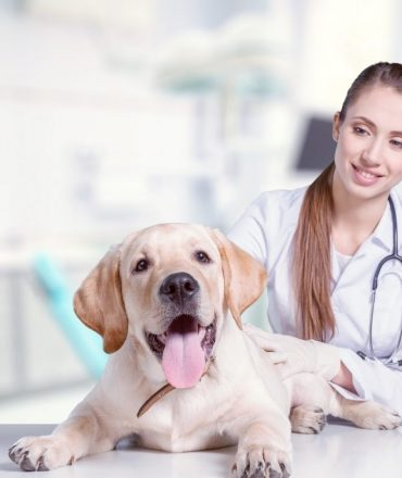 Preventative Care with Pet Insurance